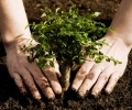 Plant A Tree and Help The Environment