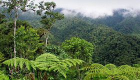 Protect The Rainforest
