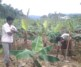 Agricultural Developement